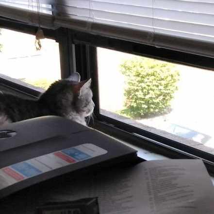 cropped-cat-in-window1-1.jpg
