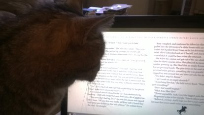 cat-reading-again