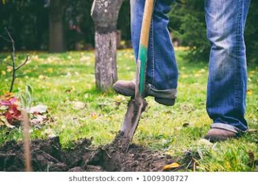 gardener-digging-garden-spade-man-260nw-1009308727